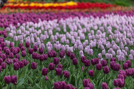 ultraviolet-flores